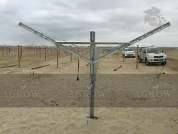 AGROW Open Gable Trellis System Peru 2015