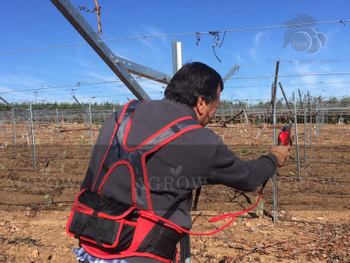 AGROW ELECTRIC SCISSORS FOR GRAPE PRODUCERS